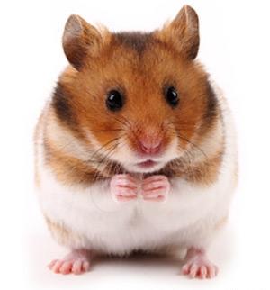 hamsterfun